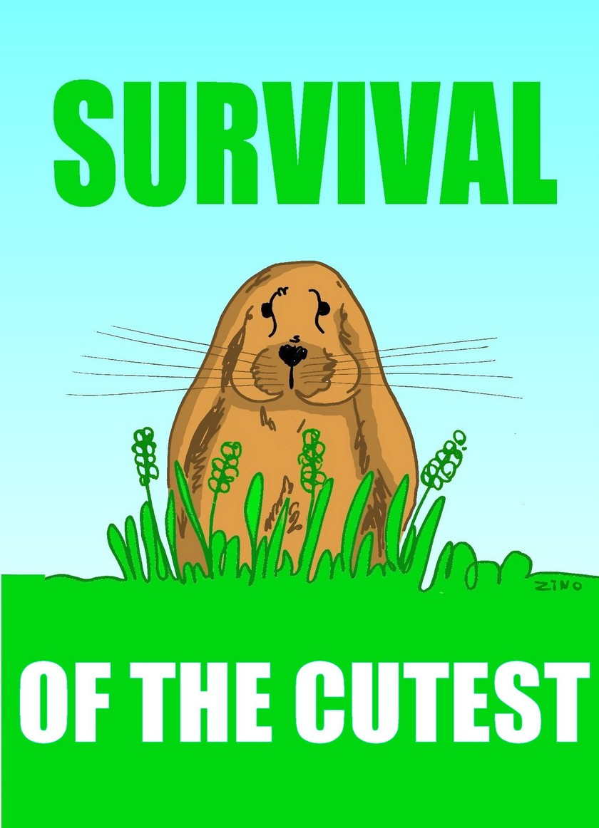 Survival of the cutest.